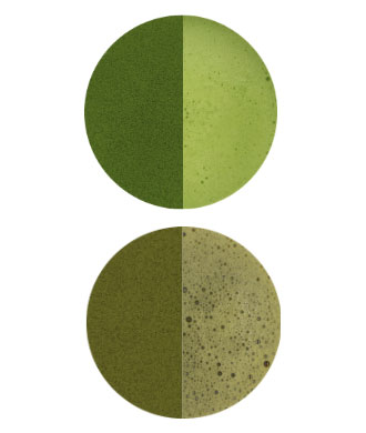 Sakucha guide to ceremonial grade matcha high quality versus poor quality matcha green tea